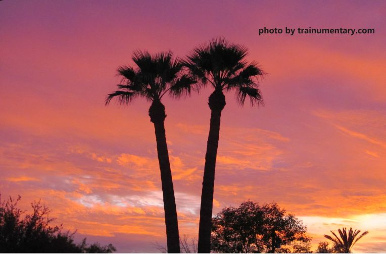 01162016 pink sky palm tree silhouette cropped with website